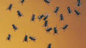 cluster flies tottenham
