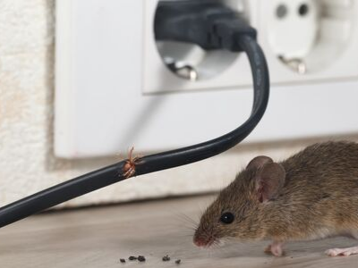 Dealing With Mouse Infestations This Fall